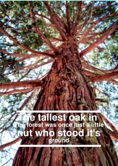 be strong like a tree.