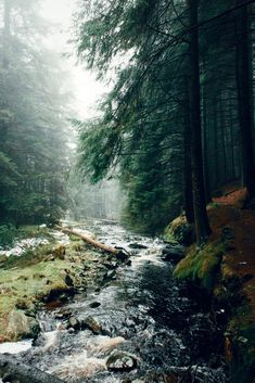 Ladyclough Forest, Oregon. Photo | Daniel Casson Photography