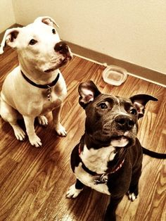 """""""We're sitting politely! Can we have the treat yet?"""""""