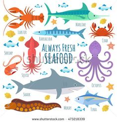 Vector seafood illustration with marine creatures
