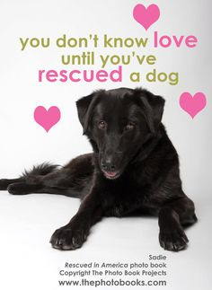 You Don't Know Love Until You've Rescued a Dog  - 8x10 pink, yellow, black.