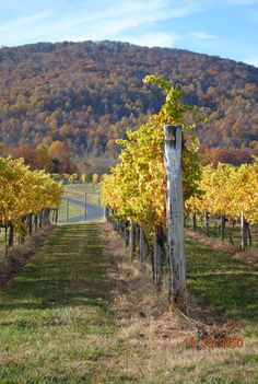 Afton Mountain Vineyard ~ a beautiful setting in the fall with great wines!