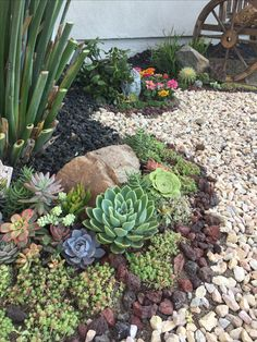 Front Yard Landscaping Ideas For Your Beautiful Garden You'll Love. 50 Creative Front Yard Landscaping Ideas and Garden Designs for Love. 50 Creative Front Yard Landscaping Ideas and Garden Designs for Succulent Landscaping, Succulent Gardening, Landscaping With Rocks, Front Yard Landscaping, Succulents Garden, Landscaping Ideas, Garden Pots, Outdoor Landscaping, Growing Succulents