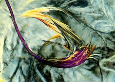 Microscopy: 1991: fusion preparation of dodeconoic acid (25x) polarized light