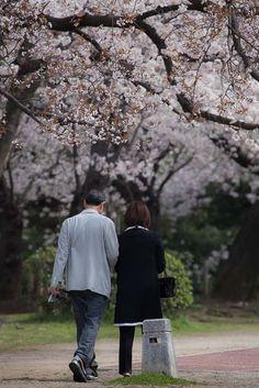 """"""" Wonderful spring """" 28.Mar.2013  とっても有名な親子さんです。お互いに桜の下で写真を撮ったり〜♪ 仲良しって素敵!"""