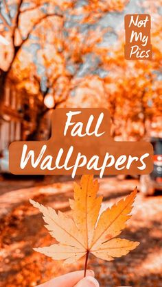 Fall Wallpaper, Iphone Wallpaper, Happy Fall Y'all, Fall Pictures, Love Quotes For Him, Shout Out, Career, Backgrounds, Feels