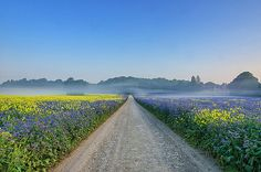 Summer Mist by jactoll, via Flickr