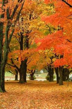 Autumn #Fall #Leaves
