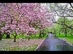 Весна в городе Прага