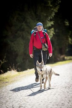Pro dogtrekking jsou vhodnější střední a velká plemena psů, například československý vlčák.