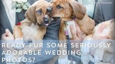 Ready fur some seriously adorable wedding photos? This wedding party ditched floral bouquets for adoptable puppies.