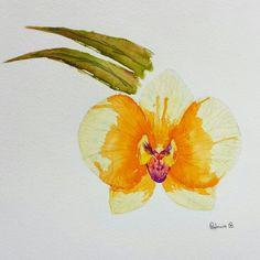 Orchidea. Técnica de afundamento e aquarela líquida. Papel Fabriano 300gr