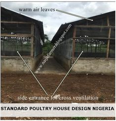 """The building design and position of the poultry house will determine the success or failure of your poultry farming venture. Chicken Cages, Chicken Feeders, Building Design, Building A House, Day Old Chicks, Poultry Farming, Poultry House, Farm Shed, Chicken Coop Plans"