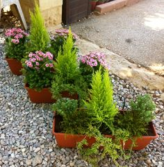 Planting in Pots Evergreens... Autumn time