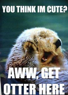 This is why I love Oshawott so much! I mean he looks like an otter and I freaking love Otters X3