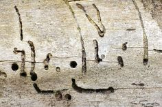 Old wood texture attacked by woodworm
