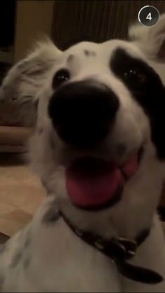 Zak Bagans dog Gracie...such a happy puppy.  Look at that smile!