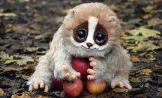 10 animais fofos que podem te matar >> http://www.tediado.com.br/11/10-animais-fofos-que-podem-te-matar/