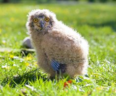 Family Bedrooms Kilkenny - We welcome children of all ages at Mount Juliet and, to make your stay as enjoyable as possible, we ask guests arriving with infants Baby Barn Owl, Baby Owls, Baby Owl Pictures, Mount Juliet, Spa Breaks, Broken Families, Cute Photos, Birds, Animals