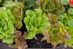Urban Gardening Without a Yard   Organic Gardening Blog