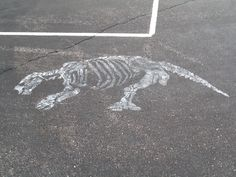 shasta ground sloth fossil