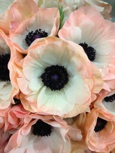 The French Tangerine: ~ anemone love