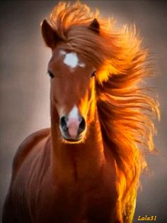 The icelandic horse love these horses! Pretty Horses, Horse Love, Beautiful Horses, Animals Beautiful, Simply Beautiful, Absolutely Stunning, Beautiful Cover, Beautiful Redhead, Gorgeous Hair