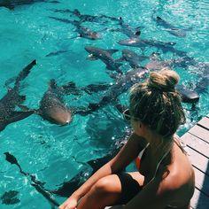 Natasha oakley with nurse sharks in The Bahamas Instagram.com/tashoakley