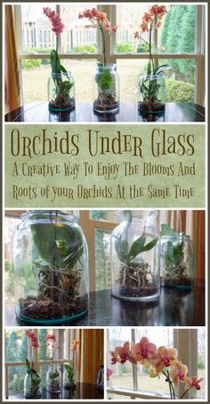 Growing Orchids Indoors: Tips On Care Of Orchid Plants Indoors Indoor orchid care is not difficult, learn how to enjoy these beauties year round. Flowers can last for months. [LEARN MORE] Indoor Orchids, Orchids Garden, Garden Plants, Vanda Orchids, Orchids In Water, Indoor Flowers, Pink Garden, Balcony Garden, Flowers Garden