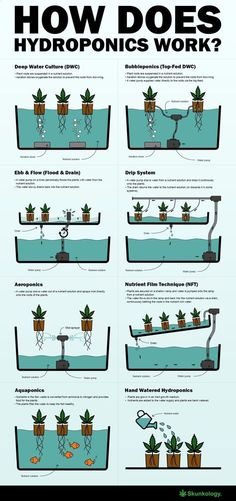 Aquaponics System - How does hydroponics work #hydroponicsinfographic #hydroponicstips Break-Through Organic Gardening Secret Grows You Up To 10 Times The Plants, In Half The Time, With Healthier Plants, While the Fish Do All the Work... And Yet... Your Plants Grow Abundantly, Taste Amazing, and Are Extremely Healthy #hydroponicgardenhowto #hydroponicgardening #hydroponicsorganic