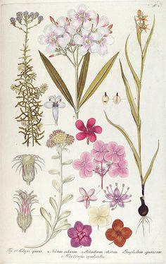 Fragmenta botanica, figuris coloratis illustrata. Viennae, Austriae : Typis Mathiae Andreae Schmidt, typogr. Universit., 1809.. biodiversitylibrary.org/page/287632