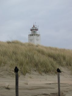 Noordwijk All Over The World, Around The Worlds, Lighthouse Photos, Beach Pictures, Beach Pics, Water Tower, Windmill, Us Travel, Places To See