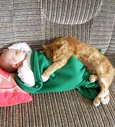 Guardian Angels: 20 Cats That Replaced Babysitters And Did a Great Job - World's largest collection of cat memes and other animals I Love Cats, Crazy Cats, Cute Cats, Funny Cats, Animals For Kids, Baby Animals, Funny Animals, Cute Animals, Gato Animal