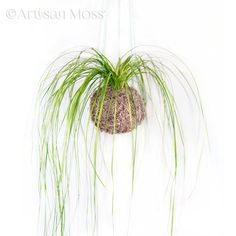 Bring the Natural Beauty of Moss Walls & Moss Art to your home or business.