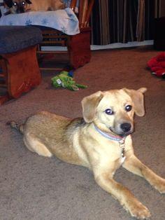 New puppy Payton!
