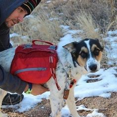 A winter walk is both refreshing and relaxing for you and your pup. Try attaching a backpack to your dog and he will carry your stuff or his own! @rolldogsurvival