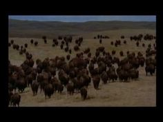 To see the skill of the Native American with the buffalo is amazing to watch. This is the Lakota Native Canadian, Canadian History, Native American Songs, Song Artists, First Nations, Anthropology, Social Studies, Buffalo, Grade 2