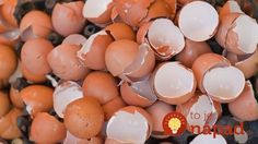 Eggshells could find use in ceramics production By Ben Coxworth February year approximately tons tonnes) of discarded eggshells must be transported and disposed of in the US alone Compost, Us Department Of Agriculture, Nordic Interior, Egg Shells, Natural Medicine, Clever Diy, Good Advice, Interior Design Living Room, Natural Skin Care