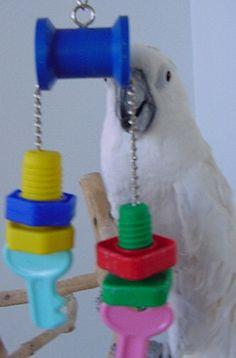 Training Your Pet Parrot Diy Parrot Toys, Diy Bird Toys, Parrot Stand, Bird Stand, Homemade Bird Toys, Parakeet Toys, Dragon Bird, African Grey Parrot, Parrot Bird