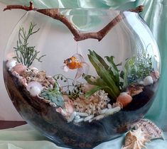 IMG_20160212_100732 Garden Terrarium, Air Plants, Diy Flowers, Fun Crafts, Flower Arrangements, Diy Home Decor, Succulents, Miniatures, Glass
