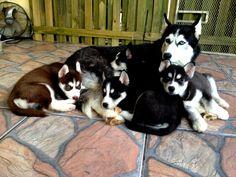Puppies...