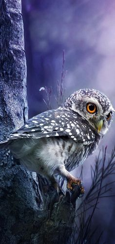 Bird, Owls, Animals, Animales, Animaux, Birds, Owl, Animal, Animais