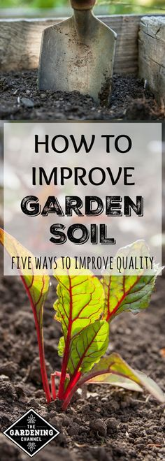 Learn five ways you can improve the quality of your garden soil.