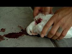▶ Criss Angel BeLIEve: Criss Brings Bird Back To Life (On Spike) - YouTube