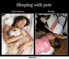 Funny pictures about Sleeping With Your Pets. Oh, and cool pics about Sleeping With Your Pets. Also, Sleeping With Your Pets photos. Funny Dogs, Funny Animals, Cute Animals, Funny Memes, Funny Videos, Funny Pitbull, Happy Animals, Dog Memes, I Love Dogs