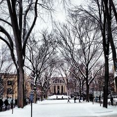 The Library at Penn State :) Miss this walk!