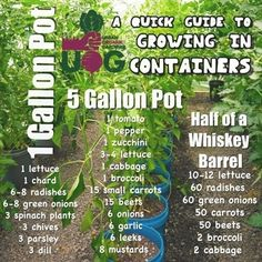 – Container Gardening – Use Thi… - garden types Garden Types, Container Gardening Vegetables, Container Plants, Organic Vegetables, Growing Vegetables, Organic Herbs, Gemüseanbau In Kübeln, Small Water Features, Vegetable Garden Tips