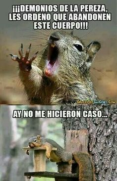 Ni pedo pos no quicieron lol . Funny Images, Funny Pictures, Funny Animals, Cute Animals, Baby Animals, Funny Jokes, Hilarious, Mexican Memes, Humor Mexicano