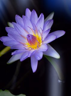 The perfect lily by Dekka  on 500px