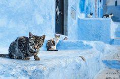 街を散策すればあちらこちらに猫たちが。猫の瞳もブルー。